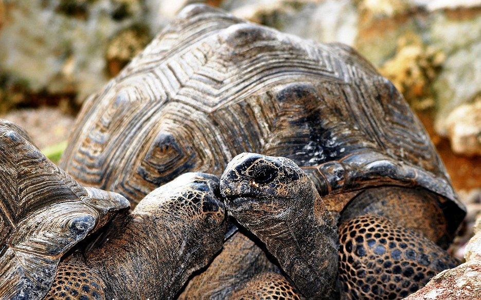 De oudste schildpad ter wereld is al jaren gelukkig met zijn vriend