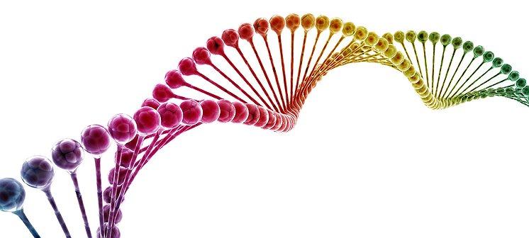 Zijn wetenschappers de genen op het spoor die je gay maken?